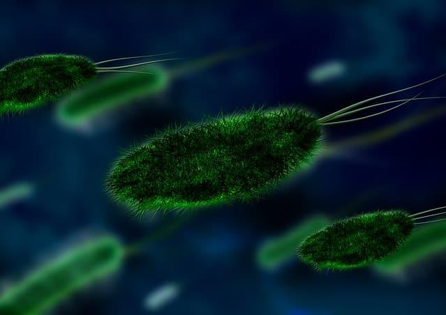 Aal Krankheiten - Aalrotseuche