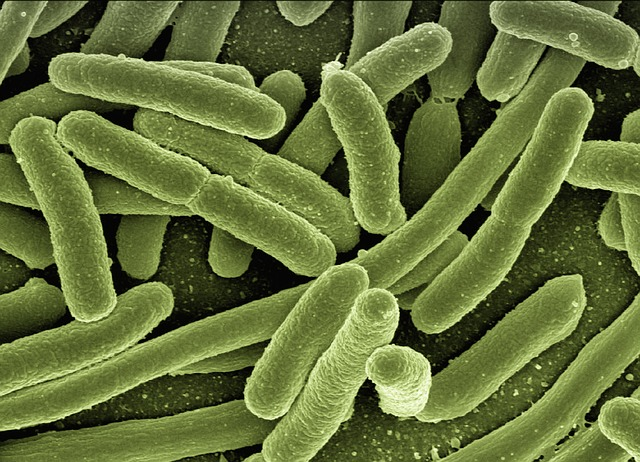 Aal - Krankheiten - Schwimmblasenwurm