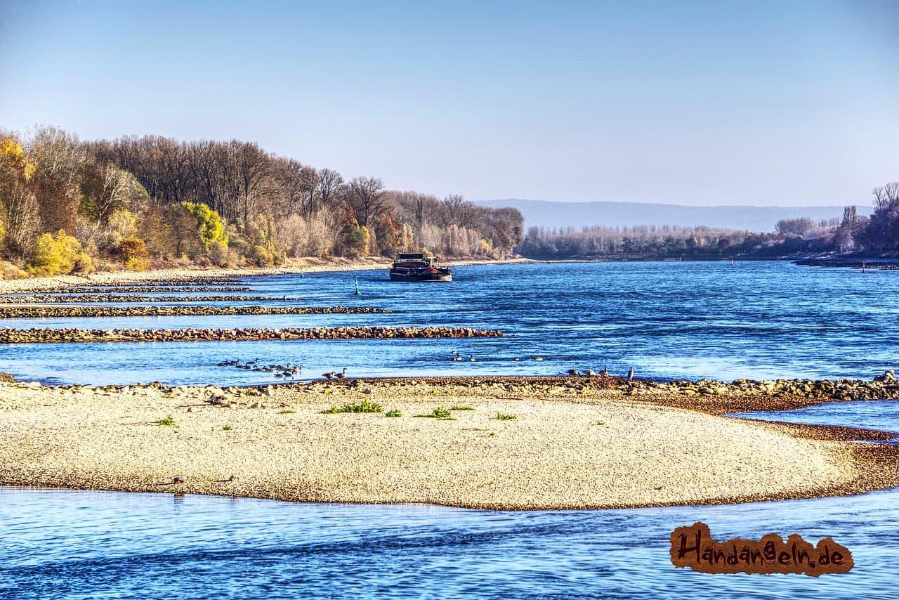 Aal angeln bei Niedrigwasser Rhein
