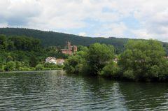 Angeln am Neckar: 1m Welse sind in der Neckar keine Seltenheit