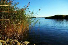 Angelschein Ahlen – so bestehst du die Fischerprüfung