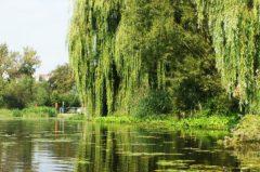 Angelschein Fulda – so kriegst du ihn schnell & zügig