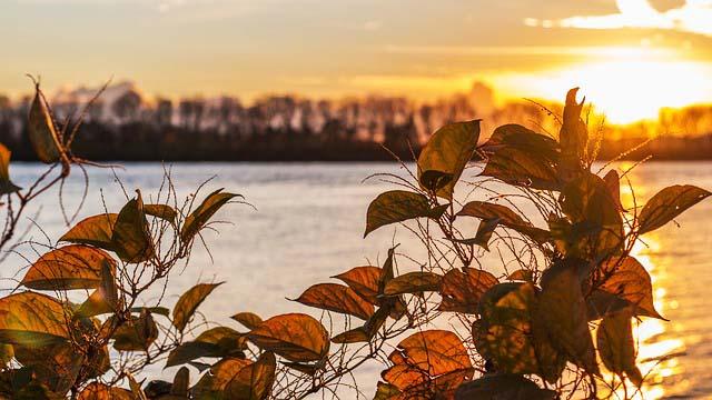Angelschein Herford See Sonnenuntergang