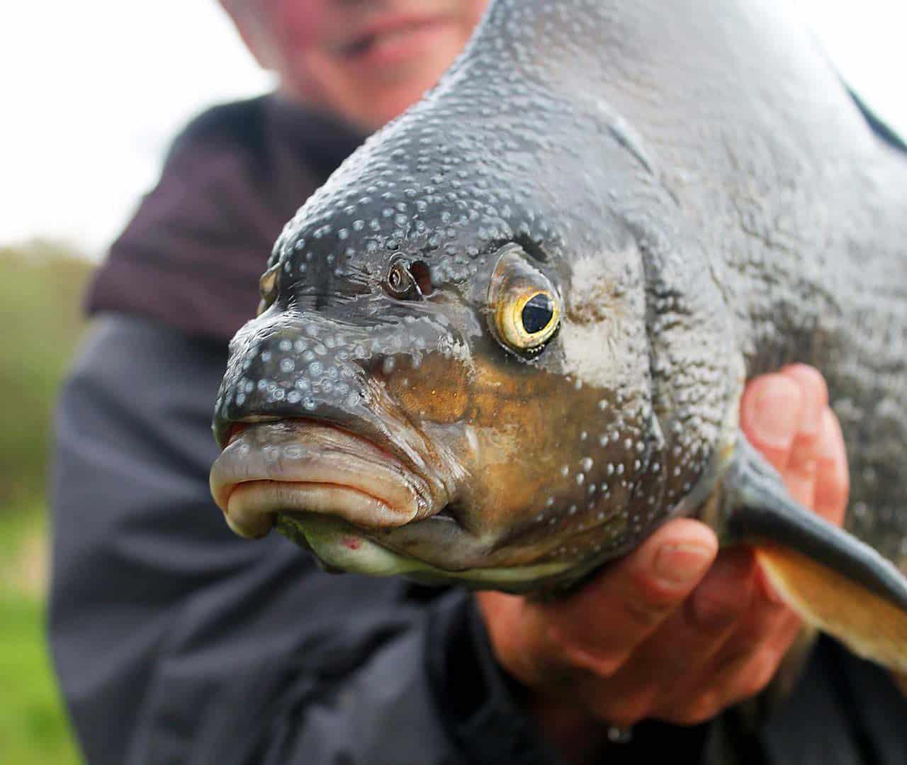 Angelschein Jena Fischereischein Fisch Angler
