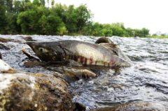 Angelschein Oelde – zügig zum Fischereischein in NRW