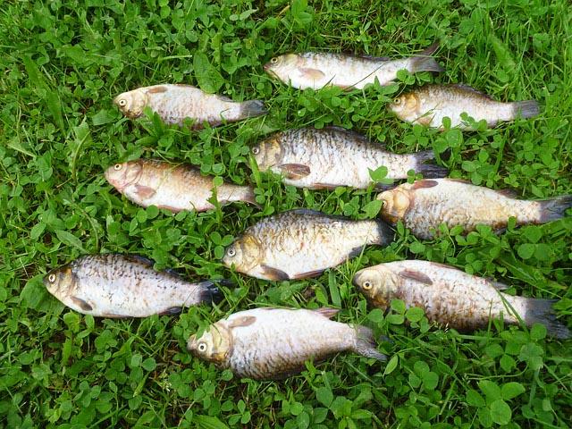 Angelschein Schleswig Fang Fische auf Gras