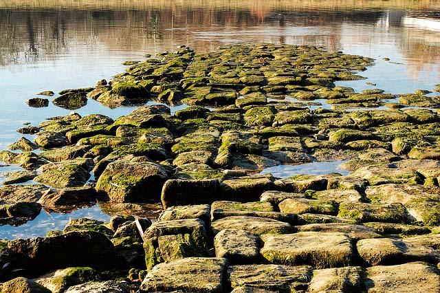 Angelschein Soest Rhein Ufer