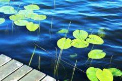 Angelschein Unna – Kurs, Prüfung & beantragen bzw. verlängern