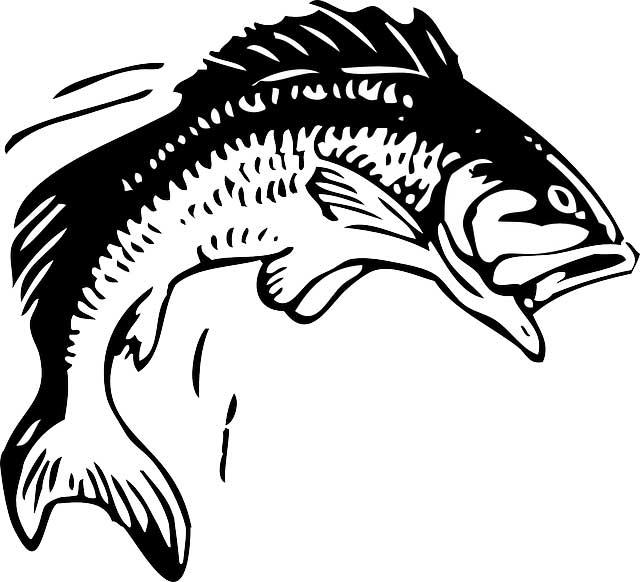 Barsch Illustration