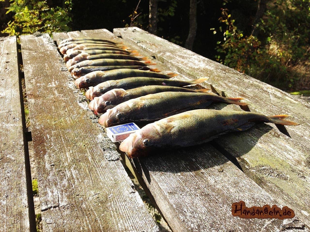 Barsch angeln am See 13 Barsche Holzbank