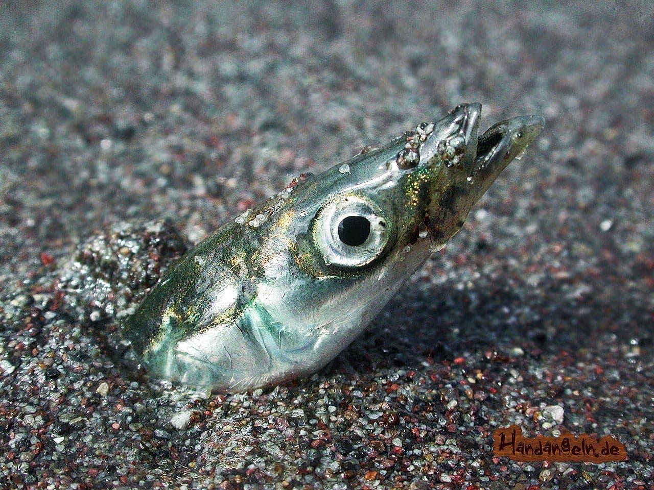 Dorchköder Kleinfische Sandaale