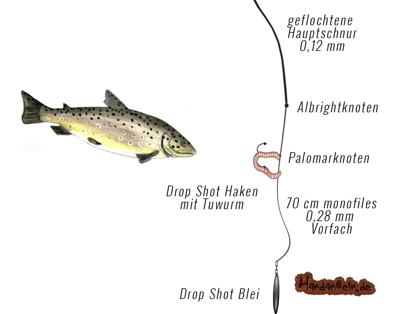 Grafische Darstellung Drop Shot Angelmontage Forelle