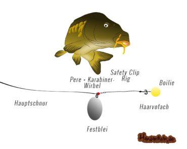 Festbleimontage – Top 6 für Karpfen, Aal, Schleie, Wels, Stör & Zander