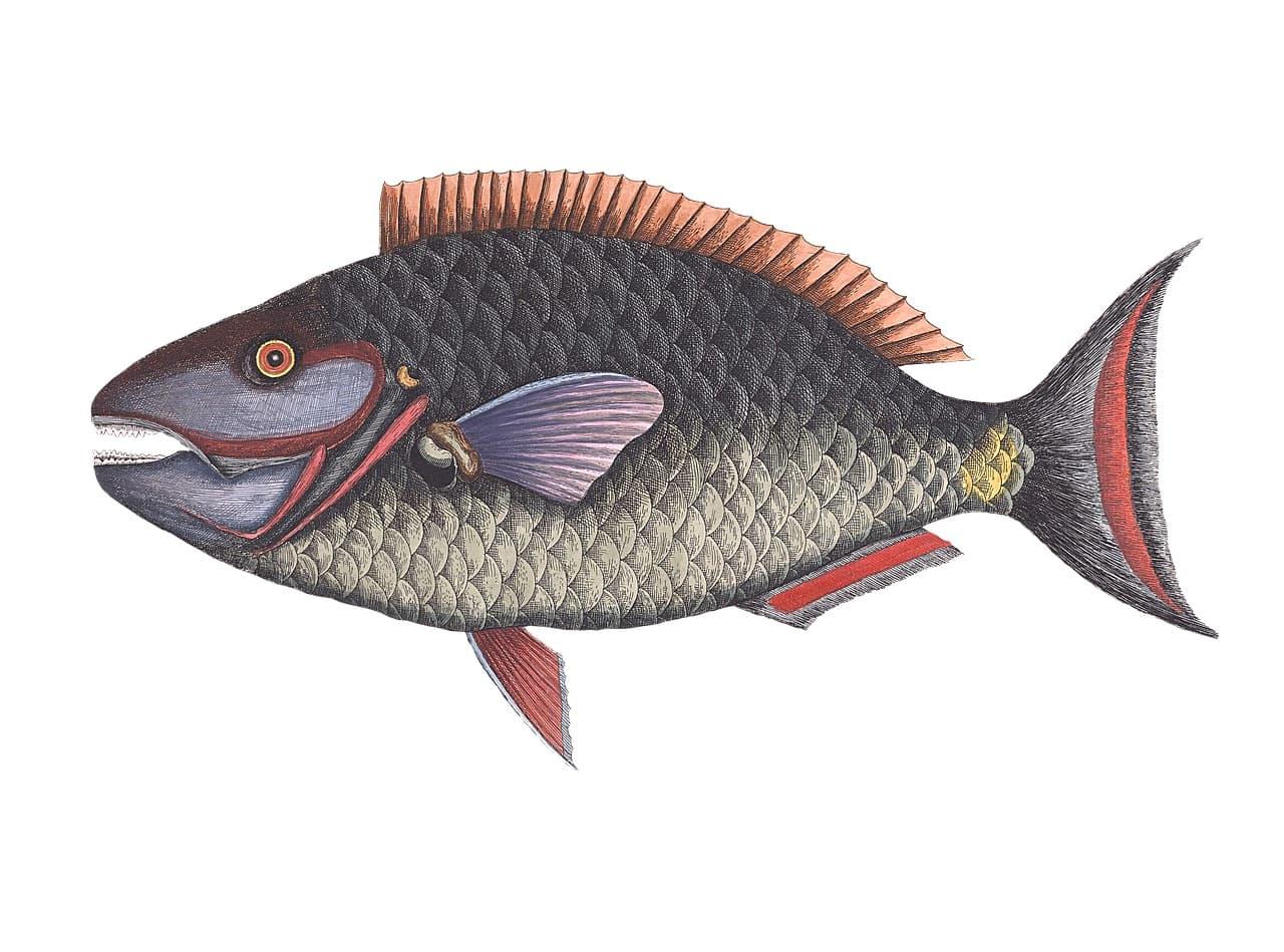 Fischbestimmung Mönchengladbach Fischerprüfung