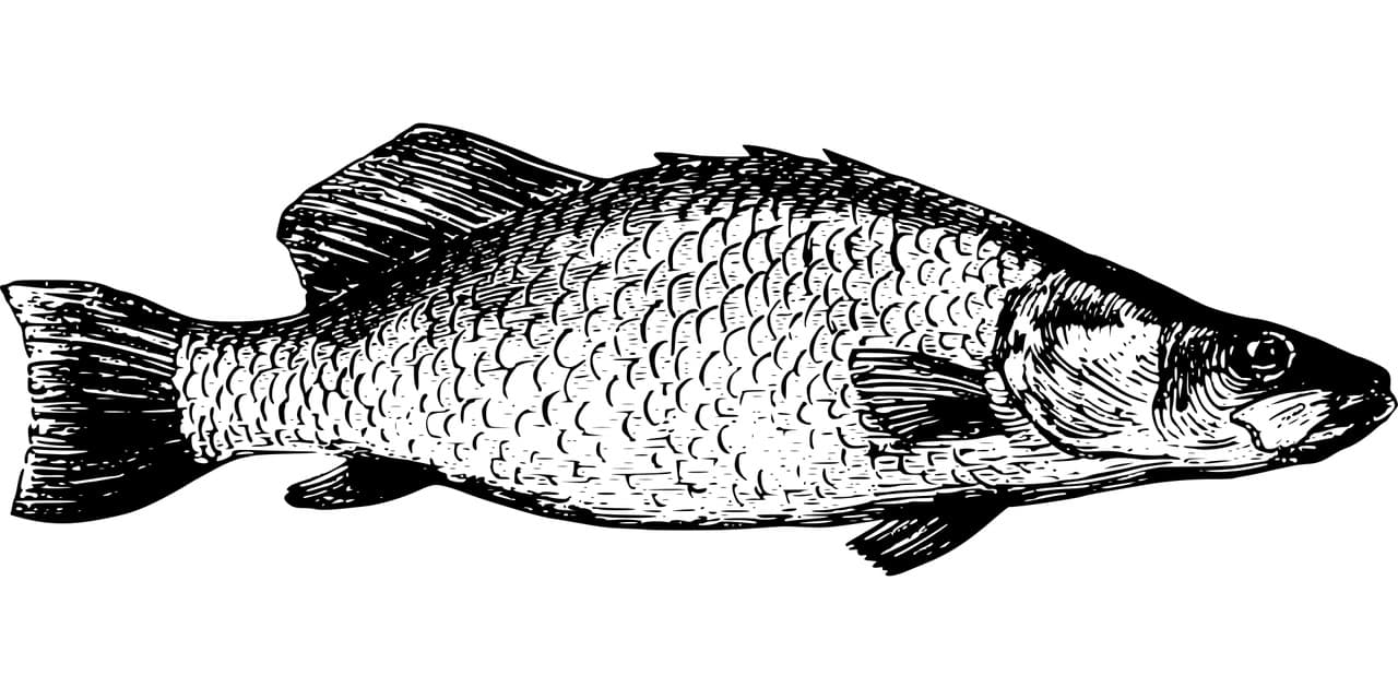 Fischbild Gütersloh Fischerprüfung