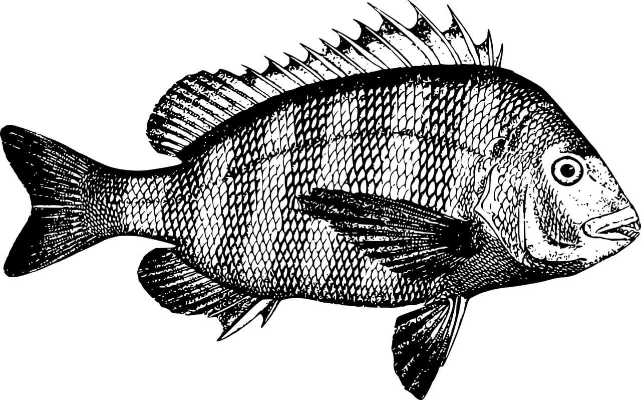 Fischbilder Lüneburg Angelschein Prüfung