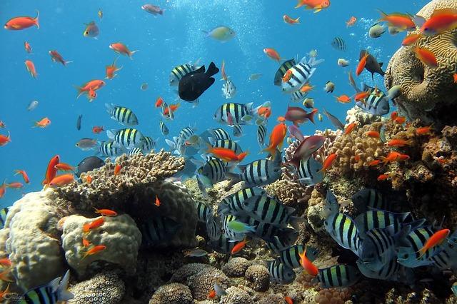 Fische entdecken