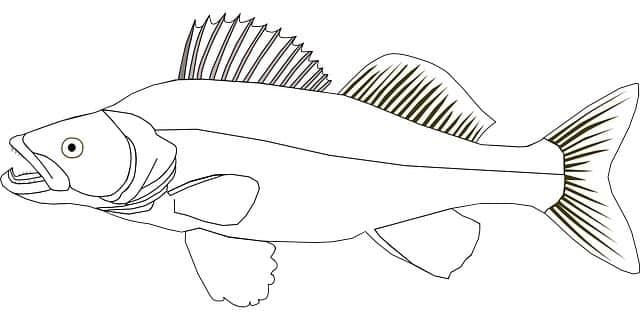Fischerprüfung Bielefeld Fischbestimmung Zander