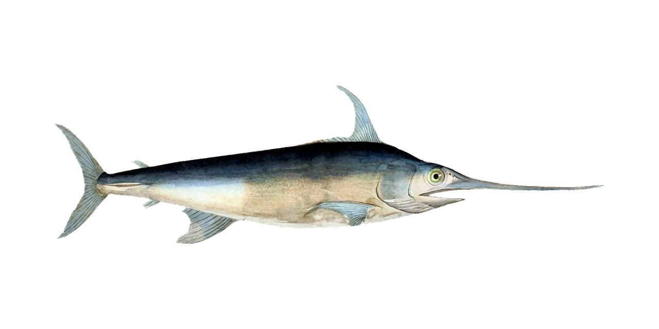 Fischerprüfung Bochum Fischbilder Schwertfisch