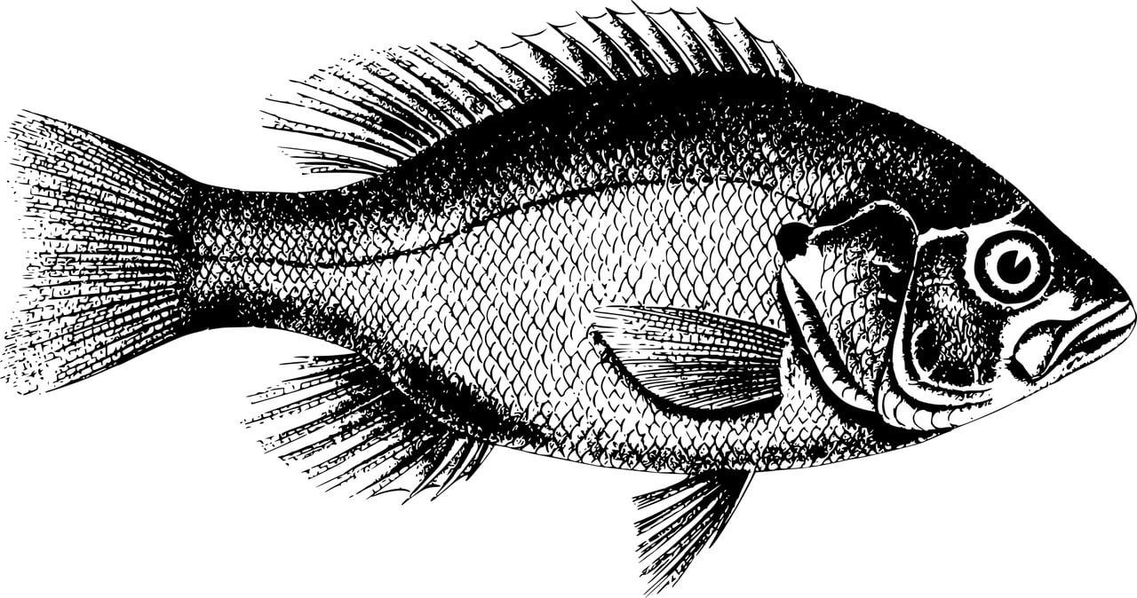 Fischerprüfung Braunschweig Fischbildtafel praktischer Teil