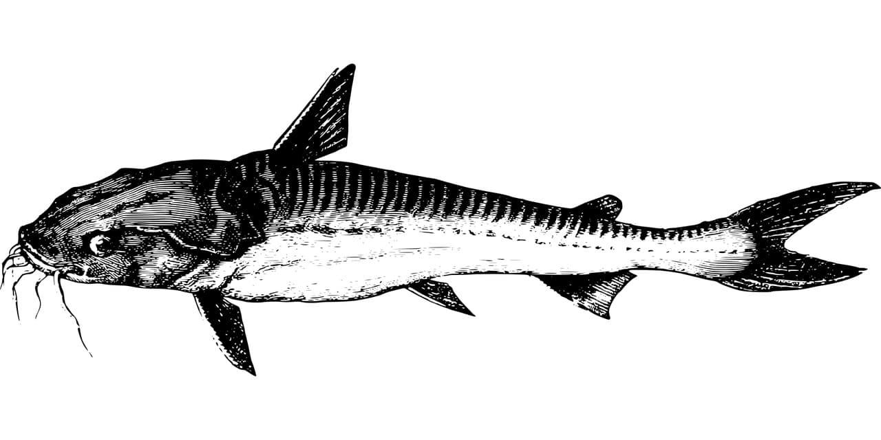 Fischerpruüfung Buxtehude Fischbild