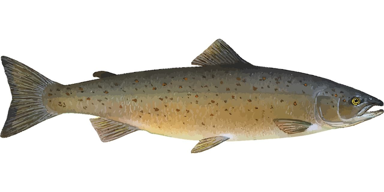 Fischerprüfung Hannover praktischer Teil Fischbilder Lachs