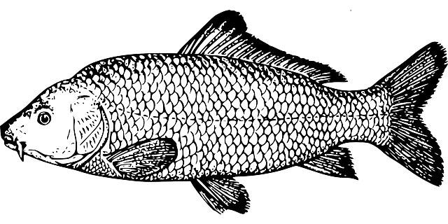 Fischerprüfung Osnabrück Fischbestimmung