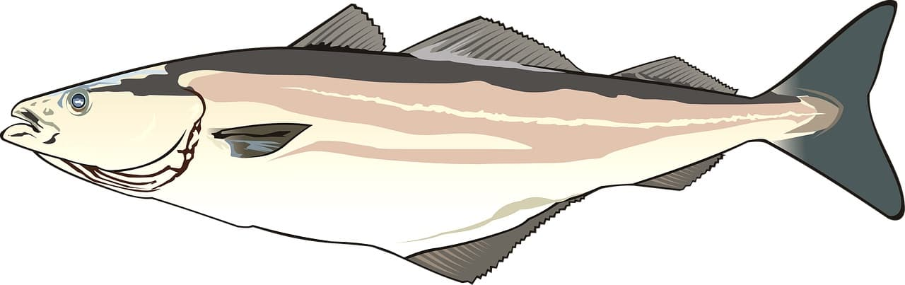 Fischerprüfung Schleswig Holstein Fischbilder Dorsch