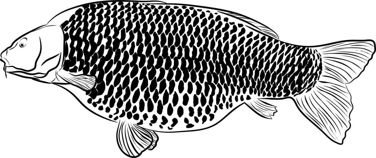 Fischerprüfung Wilhelmshaven Niedersachsen