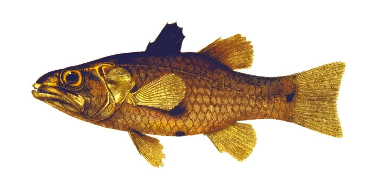 Fischerprüfung Wuppertal Fischbilder
