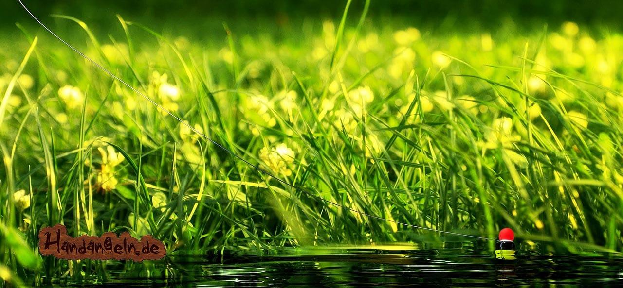 Forellenangeln Forellenteich Forellensee Wasserpflanzen