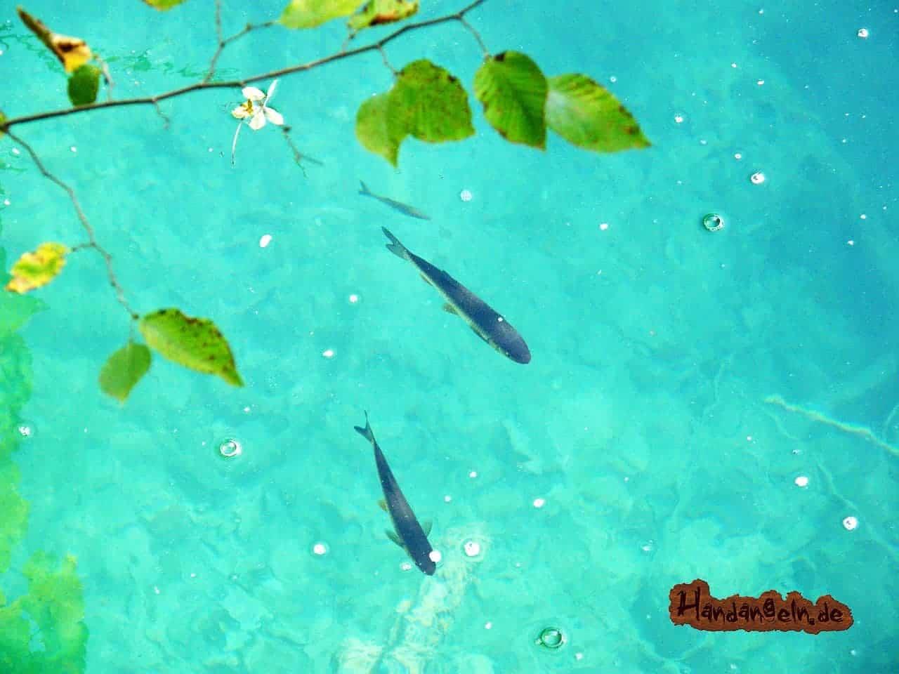 Forellenangeln See Ausrüstung 3 Forellen klares Wasser