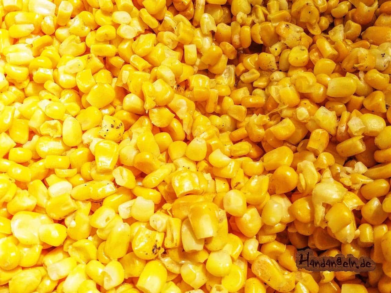 Forellenköder Mais Maiskorn