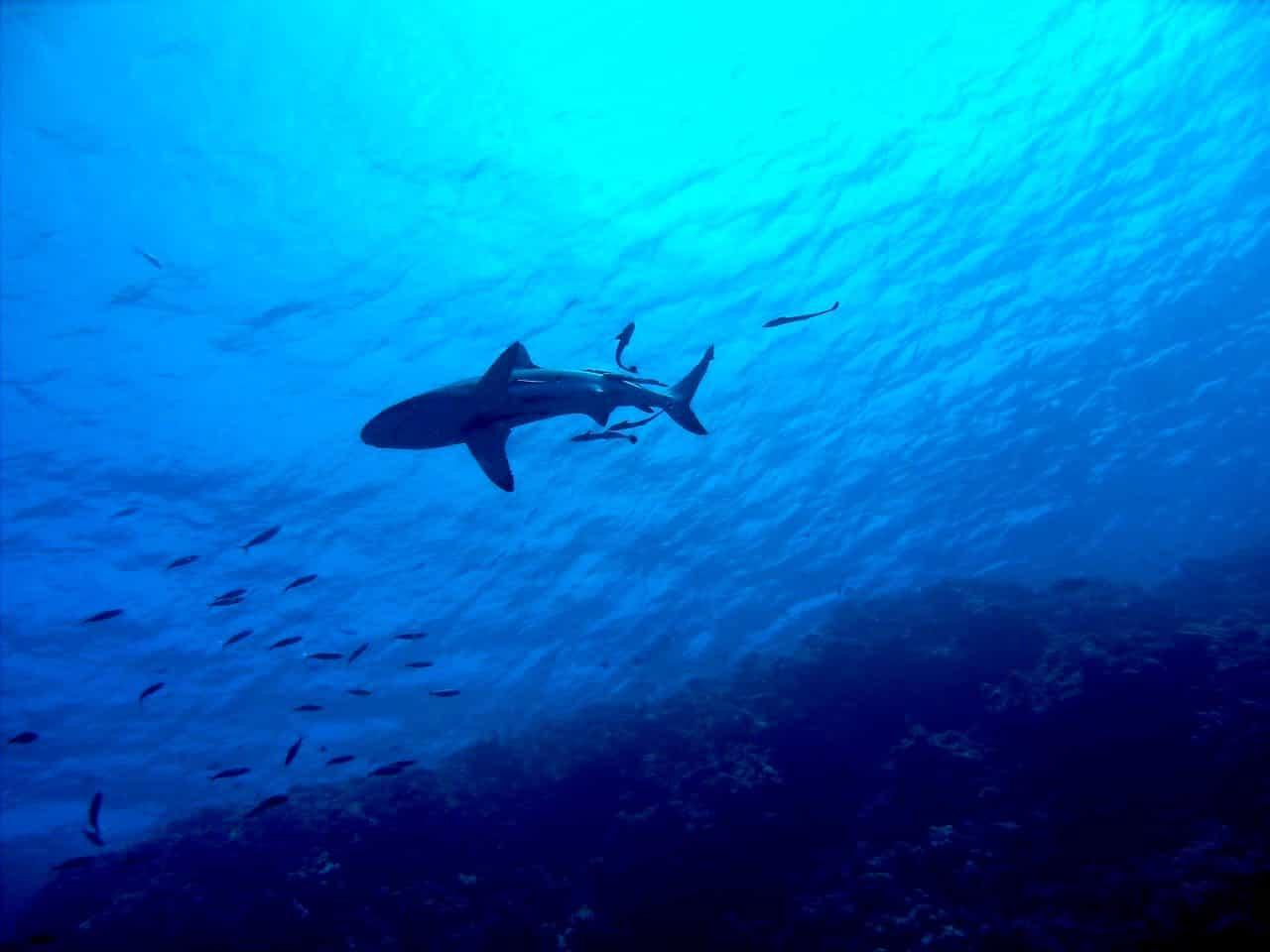 Angelplaetze - Great barrier reef Australien angeln