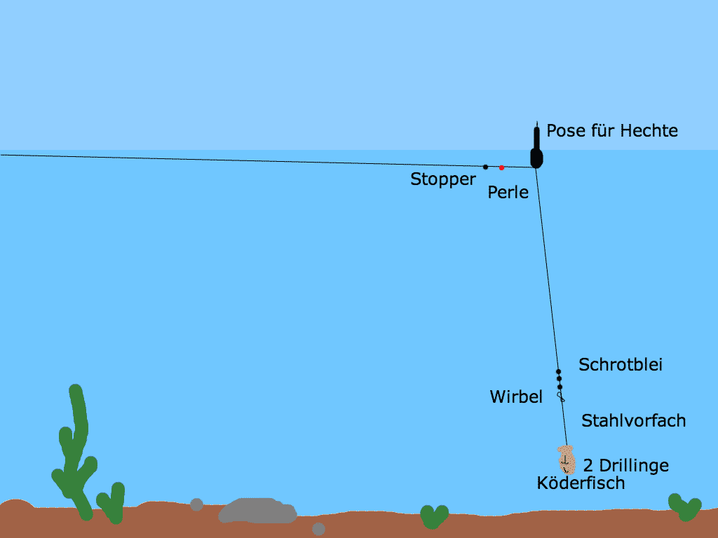 Hecht Montage - Pose mit Köderfisch