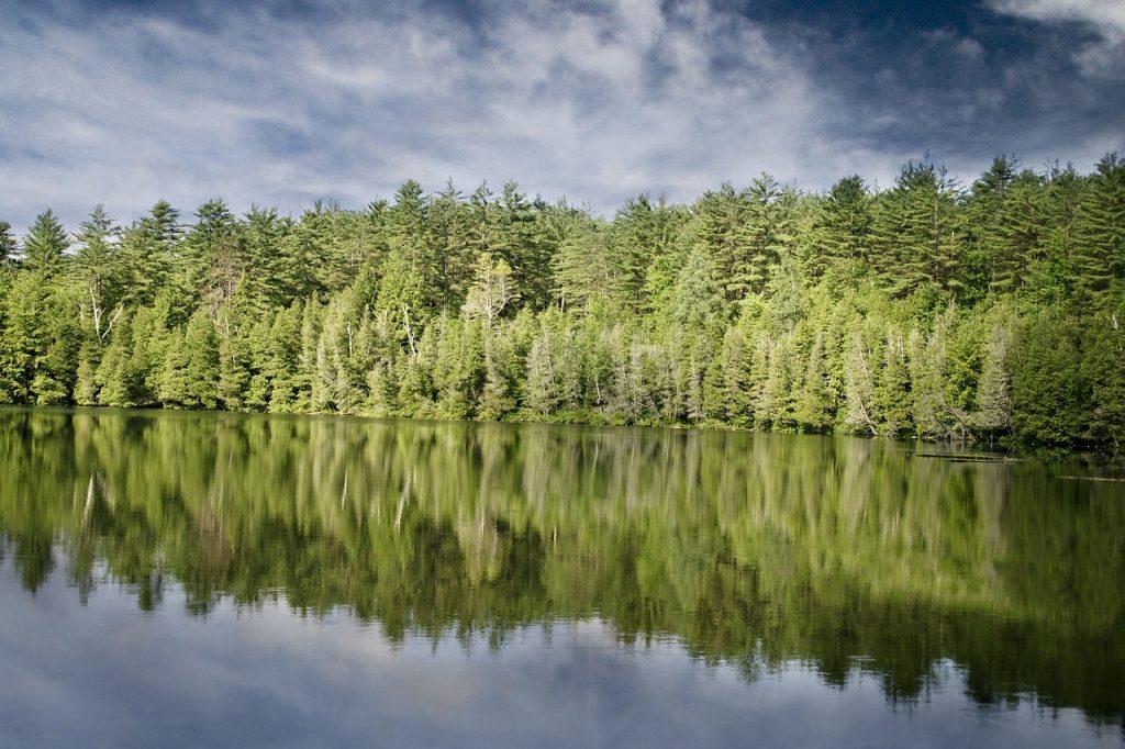 Hechtangeln - Ufer am Wald