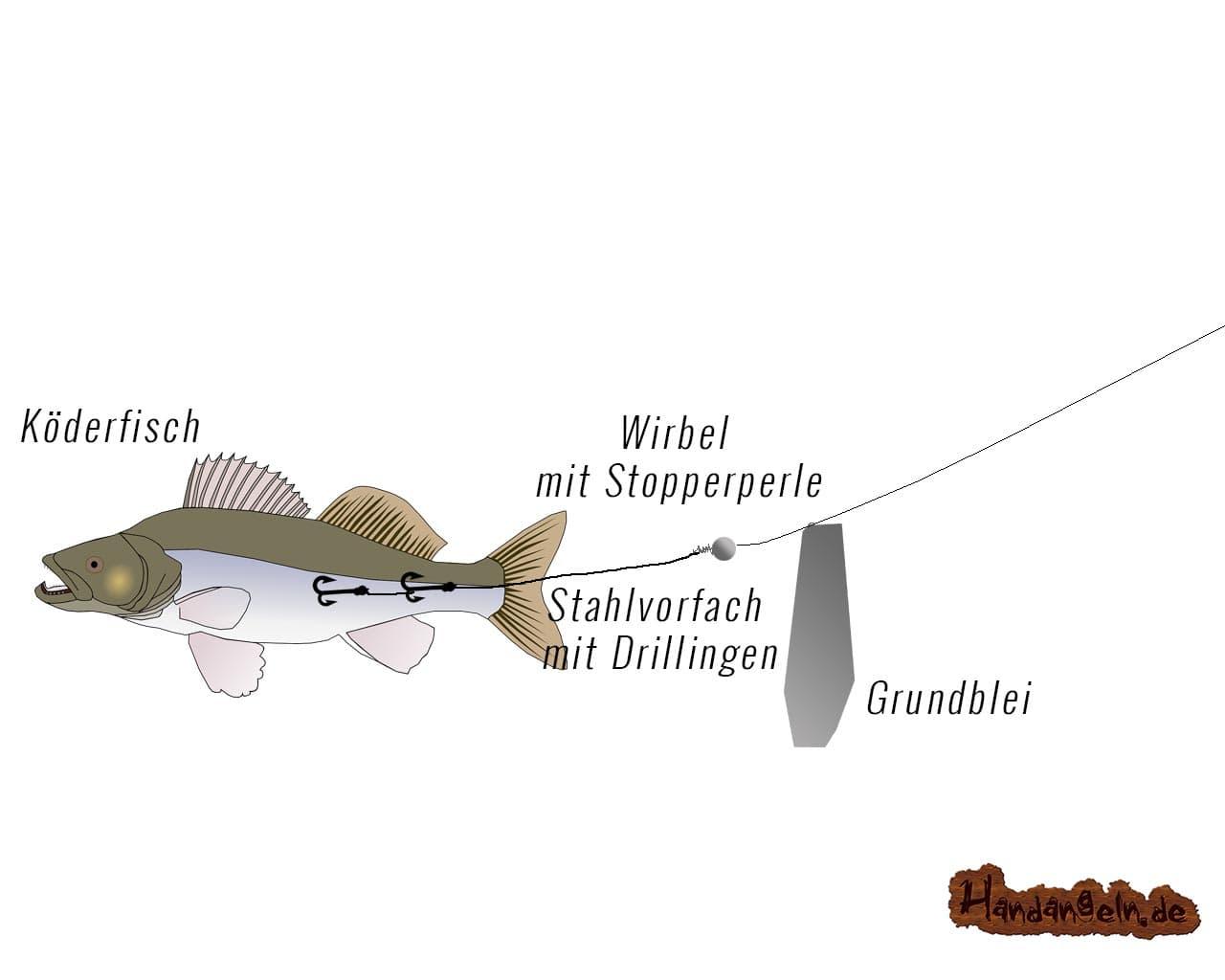 Hechtangeln mit Grundmontage Barsch Grundblei Wirbel Perle Drillinge