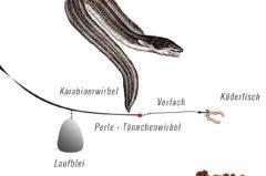 Laufbleimontage – Top 5 für Karpfen, Aal, Zander, Hecht & Forelle