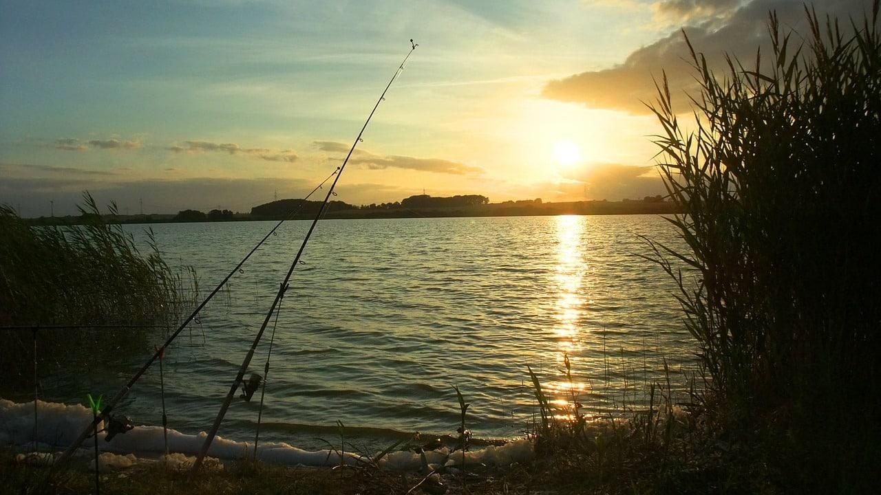 Am Liblarer See angeln - Alles wissenswerte   handangeln.de