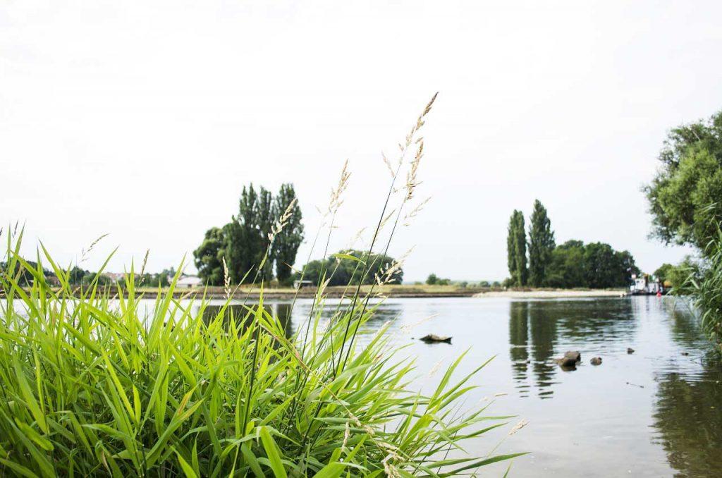 Main geeignete Stellen zum Brassen angeln