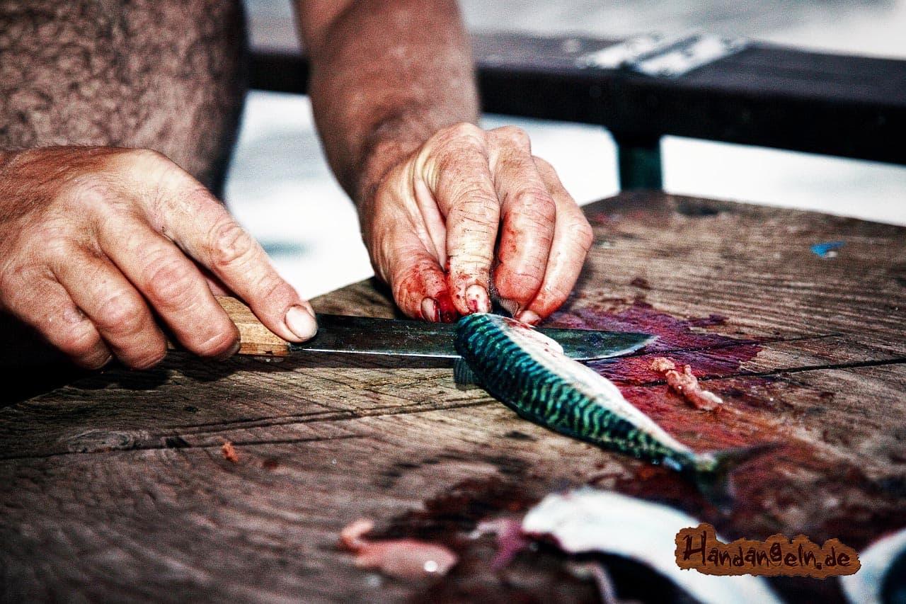 Makrele Messer ausnehmen