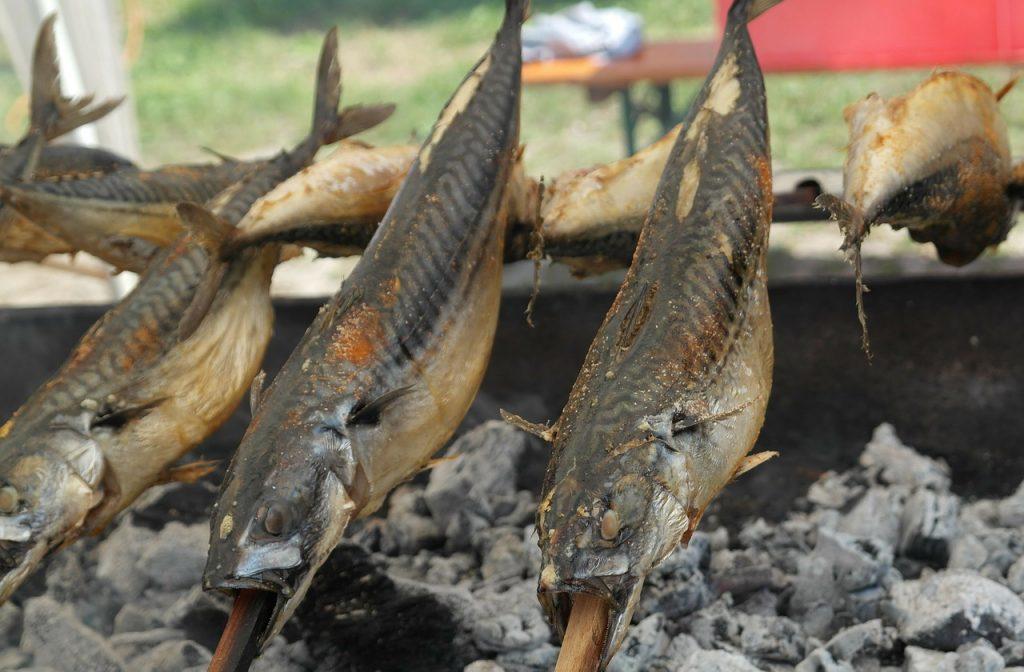 Markelenangeln - Makrele