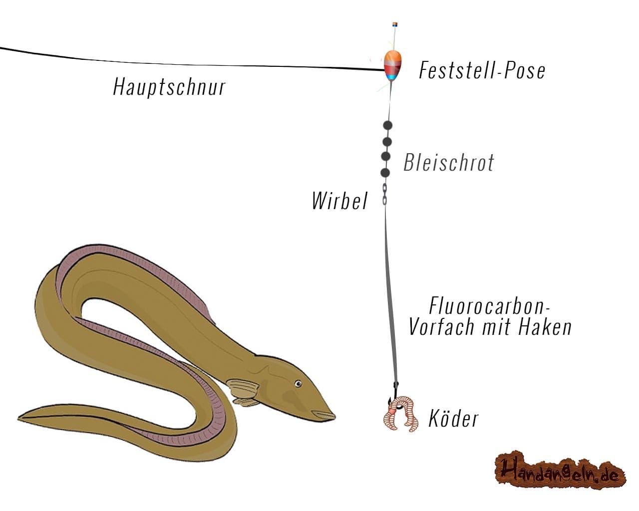 Illustration Posenmontage Aal Raubfisch