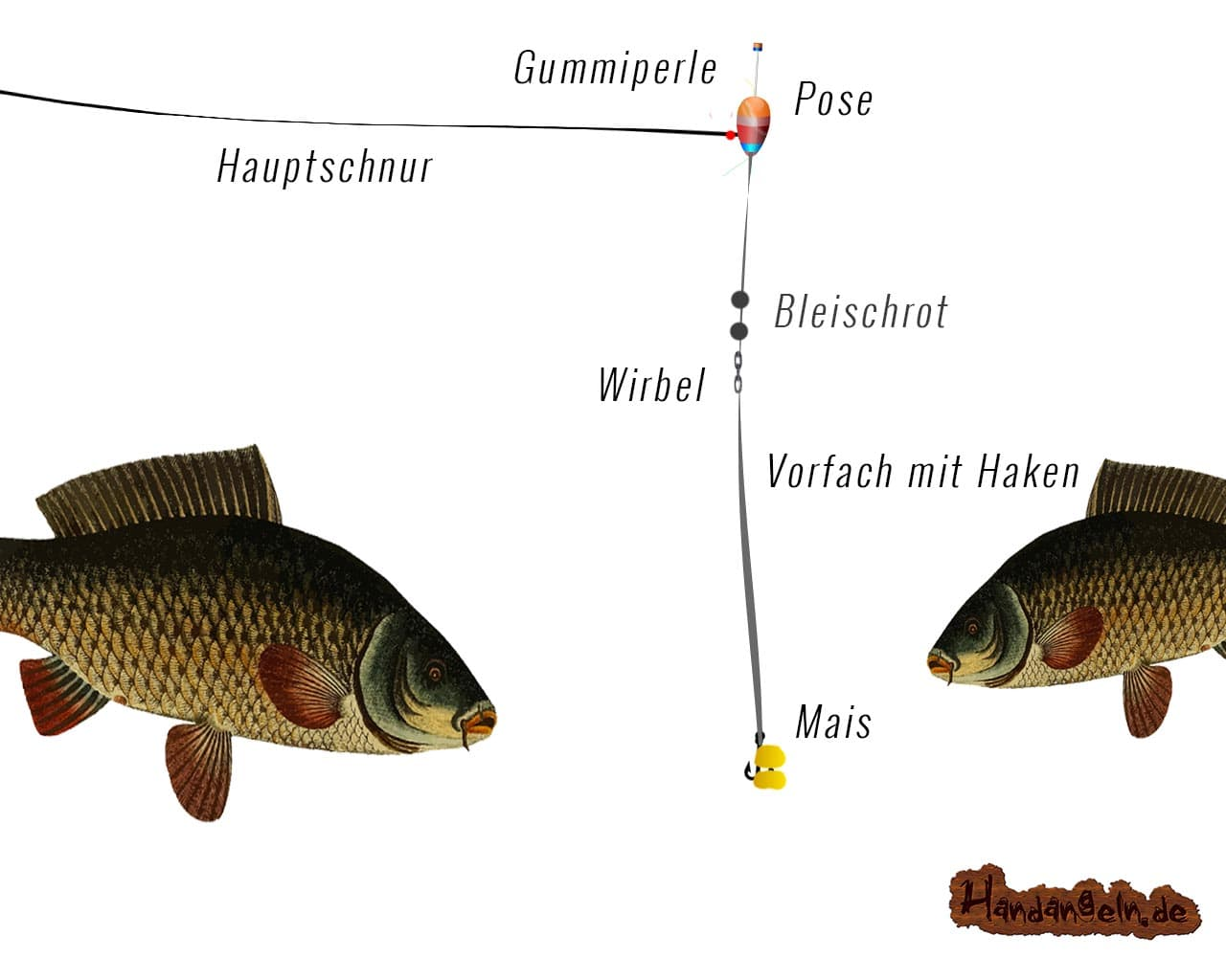 Illustration Angelmontage Karpfen Friedfisch