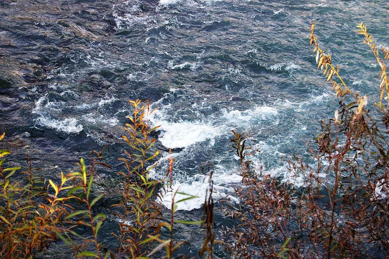 Rapfen Gewässer Strömung