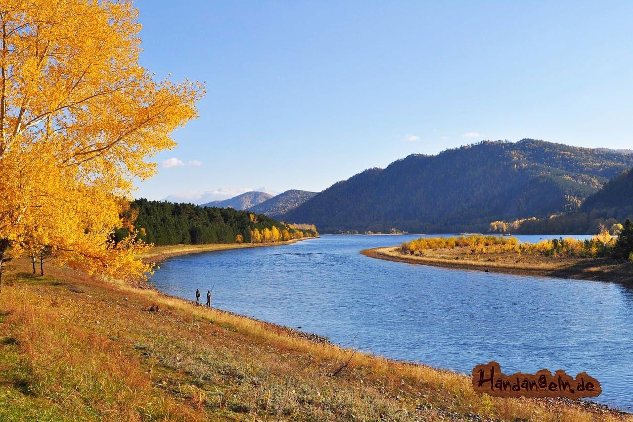 Rapfen angeln Herbst