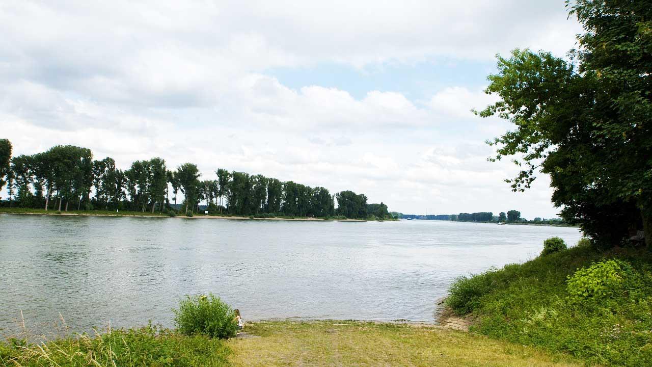Rhein Rapfen angeln