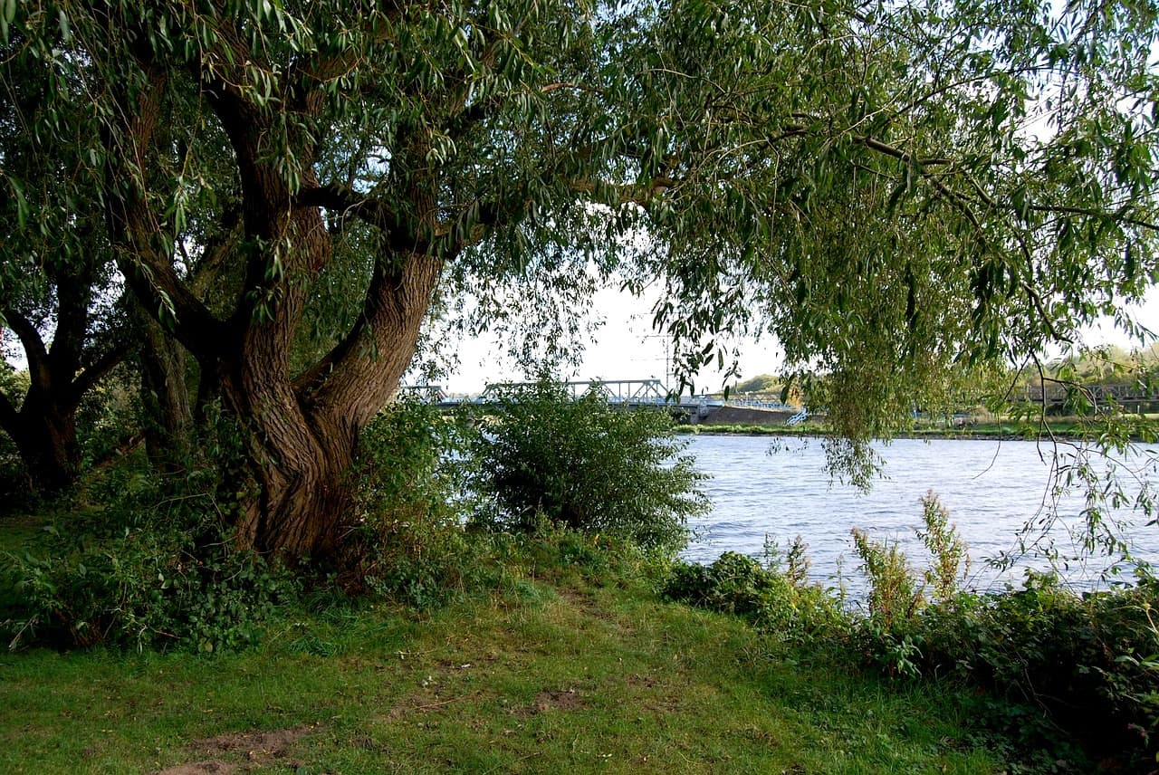 Ruhr angeln Fluss