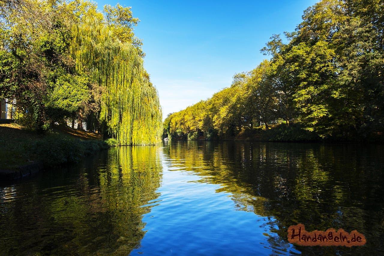 Schleien angeln im Fluss Neckar