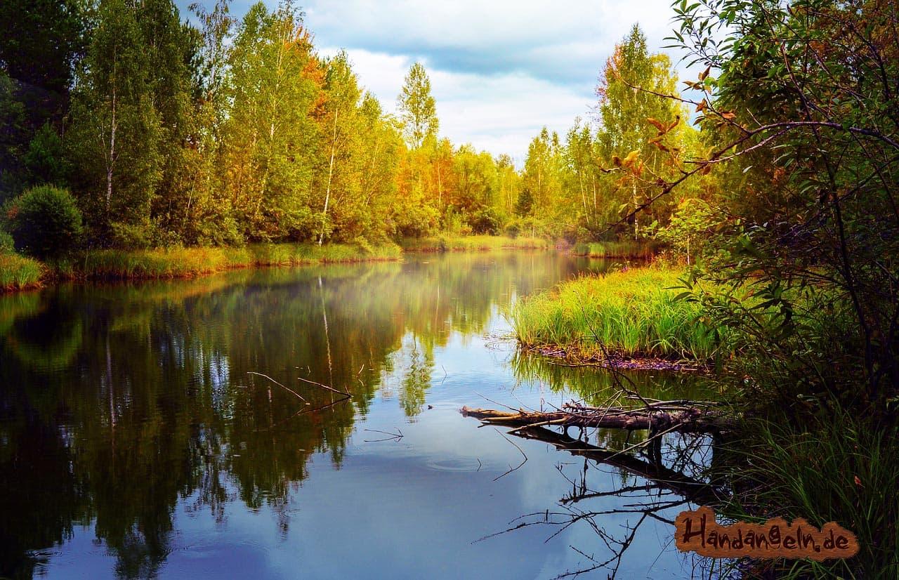 Schleien angeln im Herbst trübes Wasser